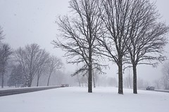 The blast of spring in its colorful beauty! (beyondhue) Tags: road winter white snow ontario canada storm fall monochrome car weather fog spring traffic ottawa april whiteout visibility conditions beyondhue