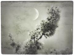 Spring Equinox (Nick Kenrick.) Tags: moon japanese spring blossom zen sakura victoriabc sakurahanami magicunicornverybest