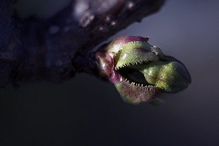 strange creatures, this monster is even an apple I (explored)