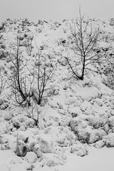 Snow embankment (Wa So) Tags: nb arbres neige lightroom k3 chamrousse pentaxda55f14