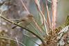 Luì piccolo (Phylloscopus collybita) - Chiffchaf (Carla@) Tags: nature birds canon europa italia wildlife liguria ornithology phylloscopuscollybita oiseaux mfcc coth supershot top20birdshots chiffchaf avianexcellence luìpiccolo alittlebeauty coth5 naturallywonderful explorenaturethewildnature