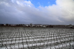 IMG_1482 (D.Phil) Tags: schnee winter natur freiburg landschaft kaiserstuhl weinberge opfingen