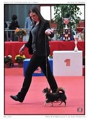 DSC_7212 (animalpicture.fr) Tags: de nikon canine exposition internationale centrale limoges d300 2016