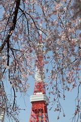 160331_0069 (JeffTsai) Tags: tokyo tokyotower