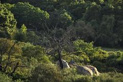 EHC lands Ridgecrest 1 032116 (evimeyer) Tags: ridgecrest ehclands