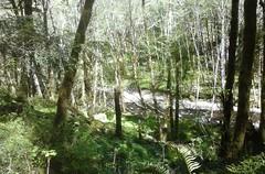 tillamookhike05 (jcravens) Tags: oregon forest hike campground galescreek stateforest tillamookforest