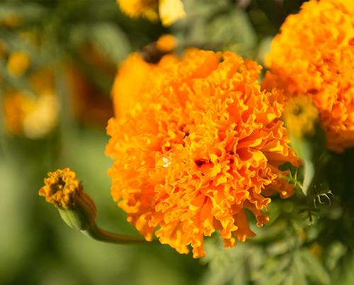 Flower #1 ©  Andrey