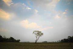Majuli Island (fredcan) Tags: morning travel winter sky india tree field clouds landscape island countryside flat roots land lonely assam northeast southasia riverisland majuli fredcan