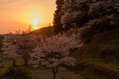 36Butsuryuji Temple (anglo10) Tags: sunset japan cherry temple