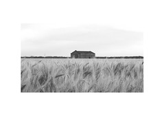 Soldini (marco zampieron) Tags: santafe argentina paisaje cielo campo pampa horizonte trigo tierra galpon