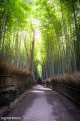 Arashiyama Bamboo Forest (Alexander.W.Photography) Tags: world travel red summer travelling green nature japan japanese ancient nikon kyoto view culture buddhism bamboo best  nippon tradition shinto japon nihon japani 2014 japn  honshu 2016 shintoism 2015 d610