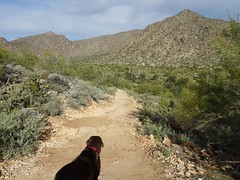 White Tank: Ford Canyon (Roamster Rosalind Gardner) Tags: arizona hiking trail surprise whitetank fordcanyon