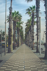 Barceloneta (Andrea Melanie) Tags: barcelona street city beach strand 35mm palms fun photography town spain nikon outdoor walk barceloneta spanien lightroom photooftheday goodtime palmen barce festbrennweite lovespain d5100