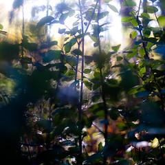 Across Forest Floors 005 (noahbw) Tags: autumn light shadow sunlight abstract blur leaves forest square landscape woods nikon dof natural bokeh depthoffield dreamy dreamlike hellernaturecenter d5000 noahbw