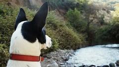 Vislumbrando con atencin canina... #SantuarioDeLaNaturaleza (Marfipixel) Tags: paisajes naturaleza nature rio river landscape soe mascotas cowdog suyai doglover quiltros santuariodelanaturaleza perrosdechile