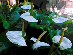 White! #Explore (denise.bardauil) Tags: plant flower nikon digitalart foliage