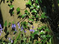 IMG_0178 (Joy Shakespeare) Tags: uk coventry woodlandtrust allesley elkinwood