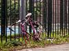 © Inge Hoogendoorn (ingehoogendoorn) Tags: bike sad bikes vandalism parked stranded fietsen fiets sadbikes lostbikes bikeparking vandalisme racefiets bikewreck dutchbike missingwheel dutchbikes strandedbike
