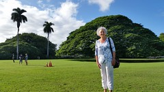 Wendy_MoanaluaGarden-Honolulu_UncleKimo_20160106_160155 (wlcutler) Tags: hawaii oahu honolulu albizia maunalua albiziasaman maunaluagarden