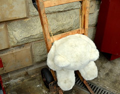 Sad teddy bear on a trolley (Tony Worrall Foto) Tags: bear county uk england white station kids funny stream tour open sad place trolley country north platform down visit location fallen teddybear area tied northern update attraction tolley ramsbottomrailwaystation welovethenorth 2016tonyworrall