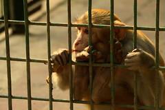 Prison Life - X (Rafee Mizan Khan Chowdhury Niloy) Tags: people nature canon garden botanical zoo wildlife photowalk dhaka mirpur 70d