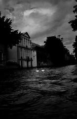 Swans (alex omarsson) Tags: brugge olympustrip kodaktrix400 belgia d7611