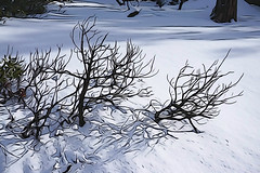 Winter shadows, Lake Tahoe (jkup) Tags: sandharbor
