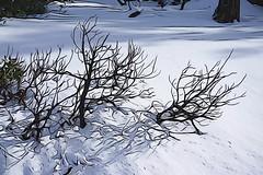 Winter shadows, Lake Tahoe (jkup) Tags: sandharbor
