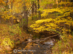 Mostly Yellow: Fall Foliage in Rockleigh NJ (moelynphotos) Tags: autumn trees yellow forest newjersey seasons fallcolors brook deciduoustrees beautyinnature moelynphotos