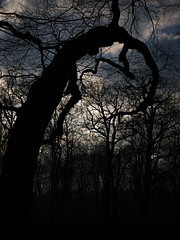 Treemscape (ThomasKrannich) Tags: sky abstract black tree nature silhouette clouds dark spiral dresden branch outdoor dream sigma nobody olympus location confused mysterious trunk mystical helix corkscrew f28 dn 30mm pm2 grosergarten mtcand