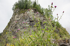 Khakassia 2015 (jsekain) Tags: travel flowers trees summer mountain mountains flower nature forest flora russia siberia   khakassia
