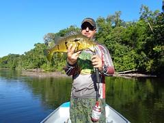 12493743_933501556739529_3239183017145731121_o (Nelson Lage - pescamazon.com.br) Tags: trip travel fish river fishing amazon bass peixe catfish xingu flyfishing casting tucunare pescaria amazonia peacockbass trombetas payara