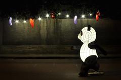 corri panda corri (eLe_NoiR) Tags: street lanterne lights panda asfalto prato peperoncini corsa notturno capodannocinese elenoir festadelleluci annodellascimmia