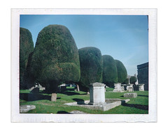 Painswick Topiary I (Pictures from the Ghost Garden) Tags: uk film vintage polaroid topiary fuji unitedkingdom rangefinder gloucestershire pack automatic land instant instantcamera churchyards 250 folding painswick landcamera packfilm yews instantfilm foldingcameras peelapart vintagecameras polaroid250 fp100c