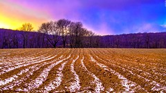 A field in Washington, New Jersey (a2roland) Tags: new blue trees red sky tractor nature colors field leaves yellow landscape photo washington corn flickr track view natural farm branches nj picture farmland norman jersey land farmer flicker zeb a2roland a2rolandyahoocom