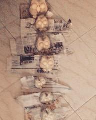 Gufi da Appoggio (Marina Marchetti .net) Tags: souvenir ferrara papier orologi papiermache segni zodiaco tartarughe gattini portachiavi calamite artistici animaletti zodiacali dipintoamano pittrice termometri decoratrice gufetti cartapeste marinamarchetti marinamarchettinet lecartapeste