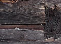 Arriach (Harald Reichmann) Tags: riss krnten tradition holz handwerk verbindung schwalbenschwanz bearbeitung dokumentation baukunst wachstum balken jahresringe verwitterung arriach wllan getreidekasten
