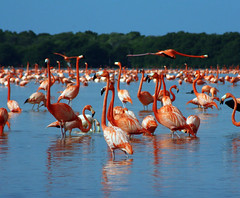 The Celestun yucatan, Migratory #birds (PhotographyPLUS) Tags: pictures graphics photos illustrations images stockphotos articles footage stockimage freephoto stockphotograph