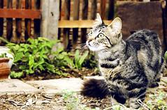 Ups (Marita's Photography) Tags: luz canon plantas natural jardin ojos mirada verdes gatita fotografa