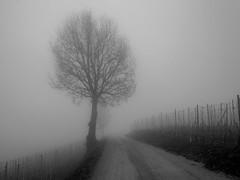 Foggy day (giansacca) Tags: trees winter fog alberi strada seasons hiver piemonte nebbia piante inverno saisons vite stagioni barolo langhe langa vigneto vigna stradadicampagna