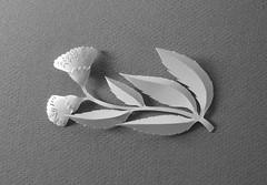 Paper art (Elsita (Elsa Mora)) Tags: art silhouette illustration paper paperart design 3d pattern handmade drawing form fiber papercraft papersculpture papercutout elsita xactoknife papercutting 3dimensionalart elsamora 3dimensionalpaper