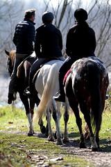 Enjoyng nature !    (carlo612001) Tags: horse nature freedom ticino fiume free natura enjoy cavalli happyness parcodelticino cavalcare
