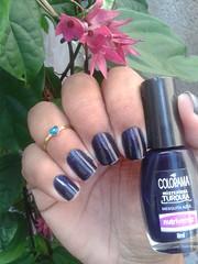 #DesafioChocolate: Mesquita Azul / Colorama (ACRibeiro) Tags: jelly colorama azulescuro desafiochocolate