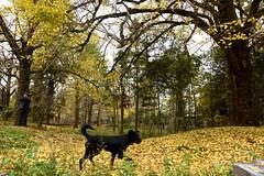 Dog (MelindaChan ^..^) Tags: china animal guilin mel melinda guangxi 桂林 廣西 chanmelmel melindachan 小平樂 海洋鄉