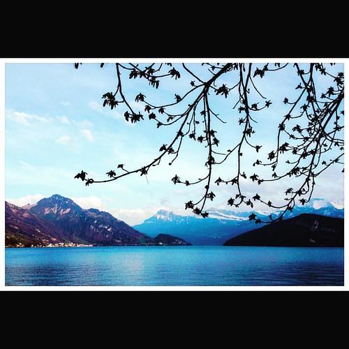 Weggis #switzerland #weggis #landscape #alps #luzernsee #lake #leisure #peace #spring #sun #sunny #giuseppeponsphoto