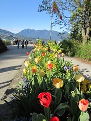 IMG_8418 (vancouverbyte) Tags: vancouver stanleypark vancouverbc prospectpoint vancouvercity
