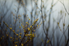 Seeking (Captured Heart) Tags: sunlight leaves spring pond growth seeking springtime searching unfolding