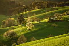 Frhlingszeit (L.u.n.e.x.) Tags: trees germany landscape spring sony landschaft bume frhling odenwald hgel 2016 rippenweier a6000 sel18200