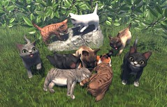 JIAN Kitten Collection (FaMESHed) ([JIAN]) Tags: pet pets cute animal cat kitten mesh kitty kittens secondlife animated companion jian