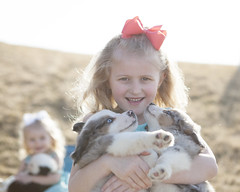 girls and puppies (johnnyvintage) Tags: girls portrait dogs kids puppies australianshepherd aussies chldren